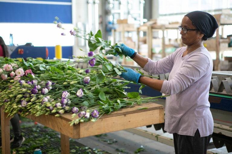 Lisianthus, Assorted, Production